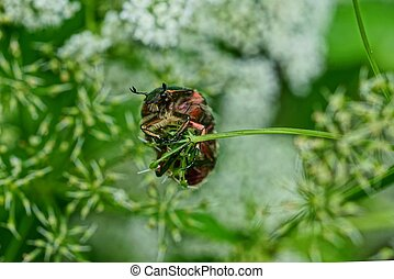 one colored beetle hangs on a thin green branch