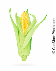 One corn on the cob (isolated) - One ripe corn on the cob (...