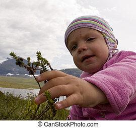 (one, crowberries, jahr, old), pflückend, kleinkind, landschaftsbild, alpin
