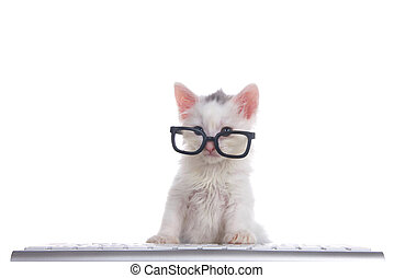 One cute adorable fluffy white kitten wearing black geeky glasses at computer keyboard