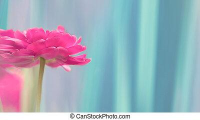 one dark pink terry tulip on a blue gradient background