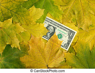 One dollar banknote in autumn maple leaves