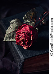 Still life with three dry roses on black bacground
