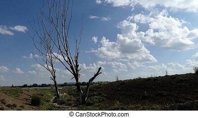 one dry tree in arid area,