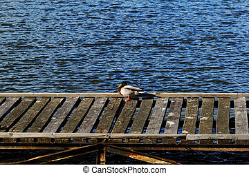 one duck in dock on the lake