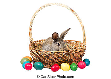 One easter gray rabbits in a basket with eggs, isolate
