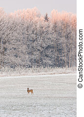 One female roebuck in front of frozen trees - Vertical photo...