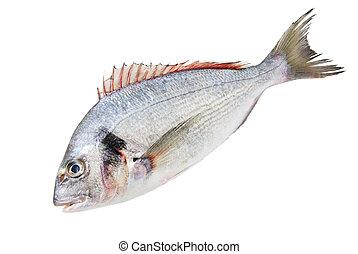 Fresh Dorado Fish isolated on white background