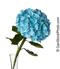 flower in a glass vase on a white background