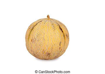 One Galia Melon Charentais