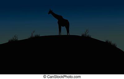 One giraffe silhouette in hills