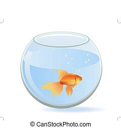 One gold fish swimming in round aquarium