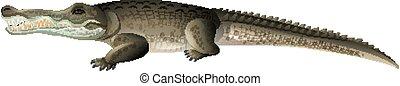 One gray crocodile on white background