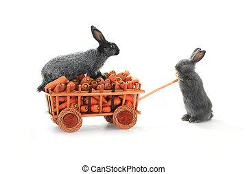 gray rabbits  - one gray rabbits vnut carrots