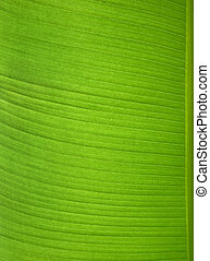one green banana leaf
