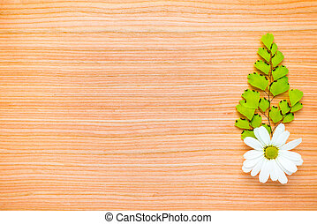 one green branch and chamomile on wooden background