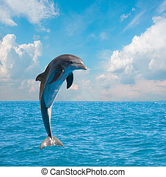 one of jumping dolphins, beautiful seascape with deep ocean waters and cloudscape