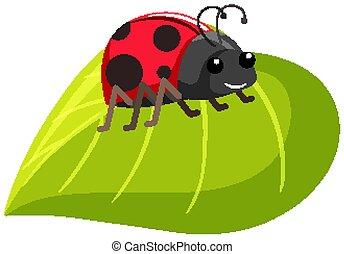 One ladybug on green leaf on white background