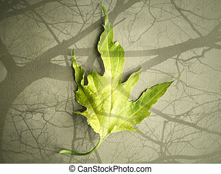 One leaf - One green leaf isolated on light brown background...