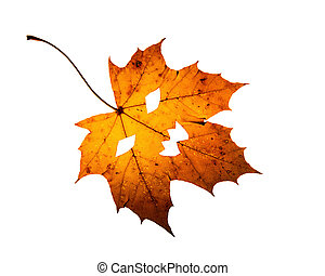 One leaf with Jack-O -Lantern cutout on white background