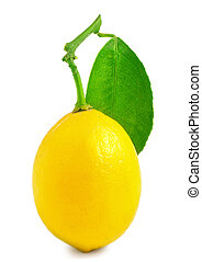 One lemon isolated on white