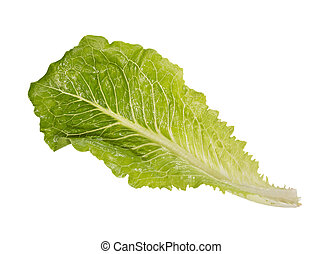 One light green salad in full size on white background. High...