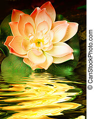 One lily flower with water reflection