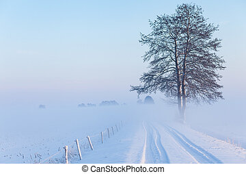 One lonely tree standing next to the road between fields covered with snow