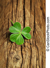 One lucky shamrock on a vintage wood background