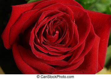 One macro of red flower