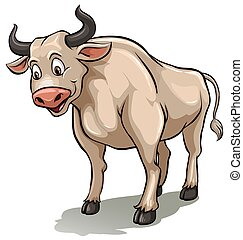 One male cow standing on a white background