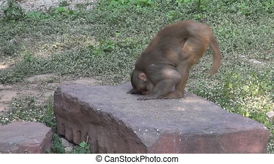 one monkey eating birds food