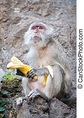 One monkey with banana sit on rock