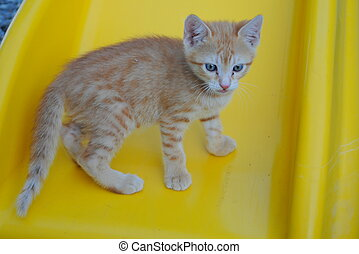 one month old orange kitten resting on a yellow chair