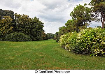 Charming green grass lawn