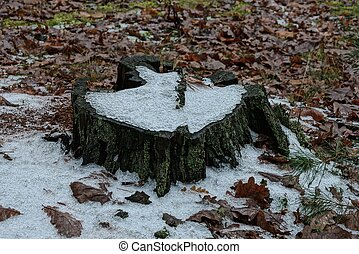 one old gray tree stump in white snow