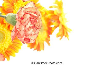 One orange carnation