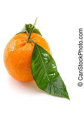one orange on white background isolated