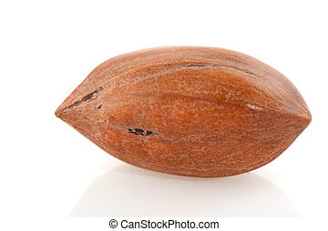 one pecan nut in macro isolated over white
