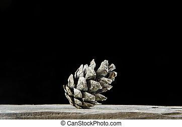 One pine tree cone