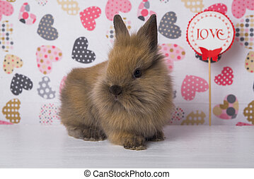 One rabbit on the background of hearts