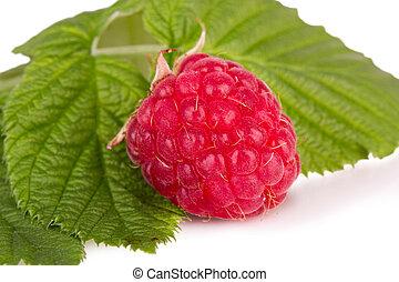 one ripe raspberries with leaves