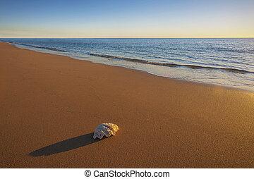 One Sea Shell on the Beach