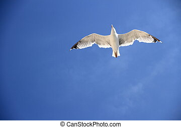 One seagull on the blue sky as background