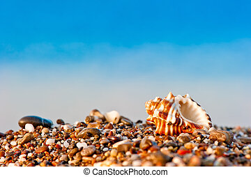 one seashell on a pebble beach on sea background