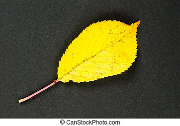 One shiny yellow leaf