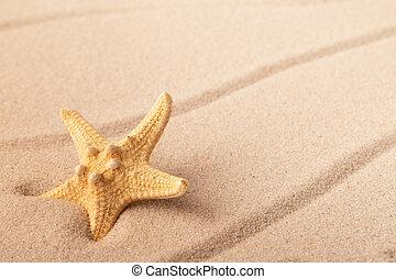 one single sea star or starfish on tropical beach sand