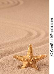 one single sea star or starfish on tropical beach