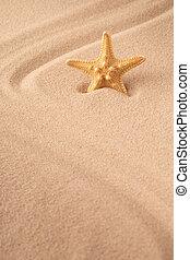 one single sea star or starfish