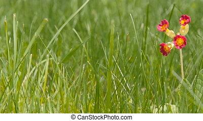 One small red flower in the grass.